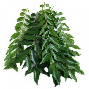 CURRY LEAF(KARIVEPILA)